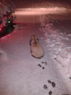 Bunny checks out the falling snow - December 11, 2014