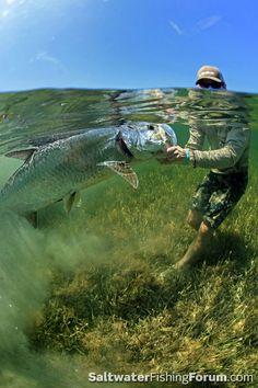 Hardcore tarpon release #fishing #wicked catch