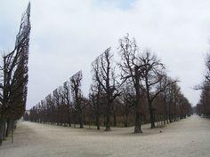 Así se ven los árboles en el Parque Schonbrunn en Austria