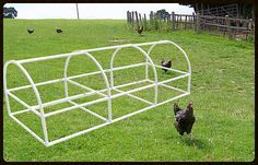 PVC fittings and Snap Clamps   Build Your Own Portable Chicken Coop