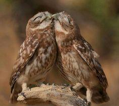Beautiful owls. :)