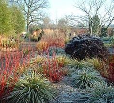 Top 10 Tips to Get Your Garden Ready for Winter