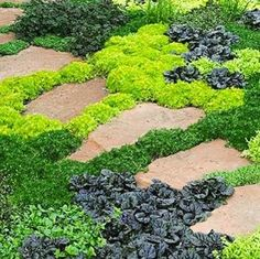 Front Yard Ground Cover
