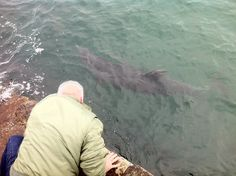 Dusty visits with the passengers on Doolin Pier almosty daily!  He's a very social creature...