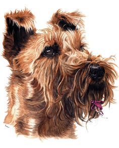 Ira -Irish Terrier-