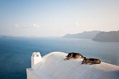 Sleeping Dogs by Derek Hayn on 500px