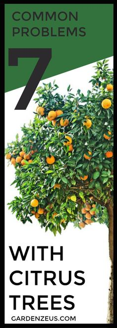 7 Common Problems Associated with Citrus Trees #citrus #gardening
