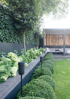 Prachtige planten border A beautiful front yard is the calling card of your h. - Prachtige planten border A beautiful front yard is the calling card of your house. Garden Design, Plants, Backyard Landscaping, Urban Garden, Modern Garden, Garden Borders, Garden Planning, Patio, Backyard