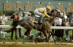 Gato Del Sol(1979)(Colt)Cougar II- Peacefully By Jacinto. 4x5 To Nearco, 5x5 To Mumtaz Begum & Mahmoud, 5(C)x5(C) To Solario. 39 Starts 7 Wins 9 Seconds 7 Wins. $1,340,107. Won Ky Derby(G1), Del Mar Futurity(G2), 2nd Belmont S(G1), Blue Grass S(G1), San Luis Rey H(G1), Oak Tree Inv(G1), Del Mar Inv H(G2), San Felipe S(G2), 3rd Santa Anita H(G1), Budweiser Million(G1), Norfolk S(G2).