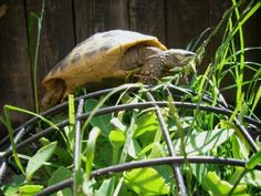 DIY Tortoise-Friendly Landscaping - PetDIYs.com
