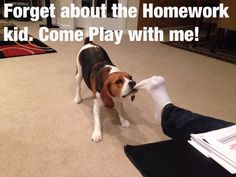 Cheddar wants to play lol. #beagle
