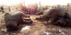 Avaaz - Nuestra mejor oportunidad de salvar a los elefantes