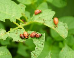 If you have any plants in your plot, now is a good time to check for any insects that might be munching on your leaves! #LoveYourPlot #garden #gardens #gardening #outdoors #plants #planting #insect #insecting #gardentips #gardencare