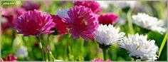 Spring Flowers Facebook Covers, Spring Flowers FB Covers, Spring Flowers Facebook Timeline Covers, Spring Flowers Facebook Cover Images