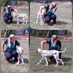 Dogs, Animals, Animais, Animales, Animaux, Pet Dogs, Doggies, Animal, Dog
