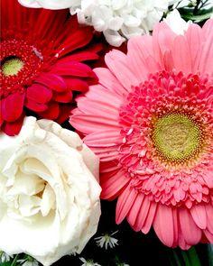 Aku Kaget: Foto macro karangan bunga warna merah dan putih, hasil jepretan Samsung Galaxy Note II.