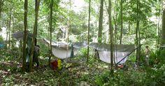 Para fazer a contagem de árvores em áreas mais remotas da Amazônia, os pesquisadores acamparam no meio da floresta. Acima, vista do acampamento Komo-kondre montado para que o grupo pesquisasse as espécies das montanhas Lely, do Suriname, em 2004