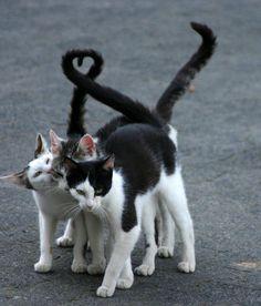 (si vous cherchez le coeur, regardez les deux queues de gauche...)