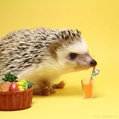 Turbo the Hedgehog | The 20 Most Adorable Animal Instagrams You Loved In 2014