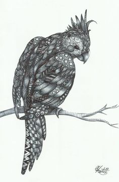 'Zentangle Cockatiel' ©Katie Sullivan