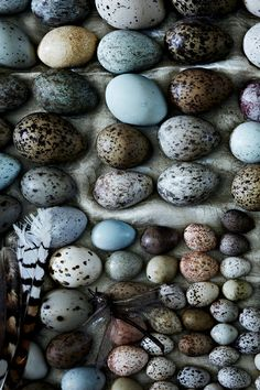 harvestheart:  Vintage Egg Collection A carefully laid out collection of eggs bought from a farmer who gathered them in the 1950's.