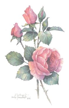 This 10 x 8 print was created from an original watercolor by Carolyn Shores Wright and is one of a number of formal flower studies she has painted