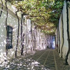 Taken by Isabel Siden in Seville. (Other pins of identical place say Valencia. Beautiful Streets, Beautiful Places, Places Around The World, Around The Worlds, Places To Travel, Places To Visit, Tree Tunnel, Urban Nature, Garden Spaces