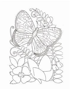 Butterflies Alight Flowers