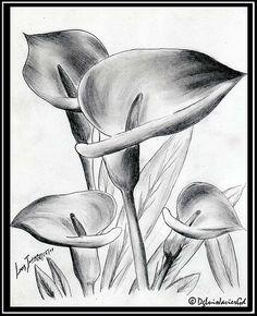Flower Sketch Pencil, Pencil Drawings Of Flowers, Pencil Sketch Drawing, Flower Sketches, Floral Drawing, Color Pencil Art, Pencil Art Drawings, Art Drawings Sketches, Art Drawings For Kids