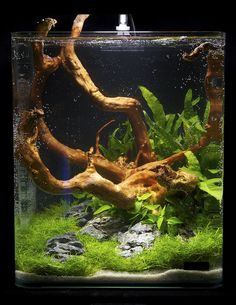 https://flic.kr/p/9fCCSv | Nano 18 | Nano contestants at the Art of the Planted Aquarium, Hannover 2011
