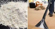 Δεκα απίστευτες χρήσεις του κορν φλάουρ που δεν γνωρίζατε Shag Rug, Cleaning, Home Decor, Tips, Shaggy Rug, Decoration Home, Room Decor, Advice, Rug