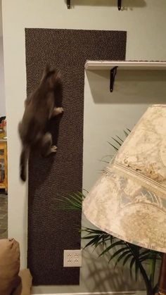 Building a Cat Climbing Wall for our cat to play and relax. (Cat Shelves, Cat Pl… Building a Cat Climbing Wall for our cat to play and relax. Cat Tree House, Cat Tree Condo, Animal Room, Wall Carpet, Carpet Tiles, Cat Climbing Wall, Cat Climbing Shelves, Gatos Cats, Cat Shelves