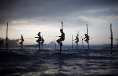Not an adventure...but extreme in my eyes!!  Sri Lankan fishermen wait to catch fish as they sit atop stilts in Ahangama.