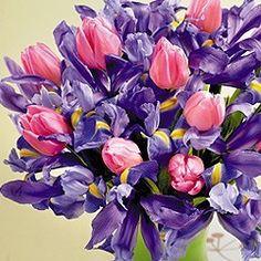 decorazioni-pasqua-fiori-viola.jpg 251×251 pixel
