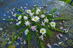 mano kellner, nature mandala Nature, Plants, Mandalas, Easy Mandala, Black And White Pictures, Art In Nature, Calendar, Monochrome, Naturaleza