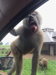 Miley Cyrus of Apes