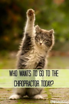 to Bolingbrook Family Chiropractic today if you haven't received your adjustment this week!Get to Bolingbrook Family Chiropractic today if you haven't received your adjustment this week! Chiropractic Quotes, Chiropractic Therapy, Chiropractic Office, Family Chiropractic, Chiropractic Wellness, Chiropractic Assistant, Chiropractic Benefits, Chiropractic Center, Cute Funny Animals