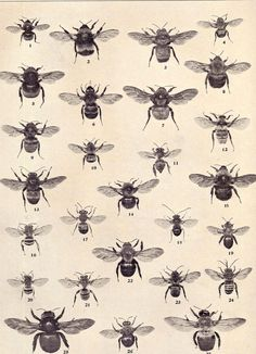 Bees:  #Bees.