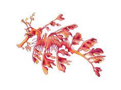 seahorse leafy sea dragon watercolor art print by ArtistaStyle, $25.00 Fish Artwork, Dragon Artwork, Leafy Sea Dragon, Sea Art, Coastal Art, Sea Creatures, Artwork Design, Watercolor Paintings, Sketches