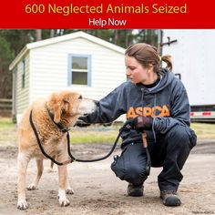 Emergency Help Needed for 600 Neglected Animals - Help Now The Animal Rescue Site