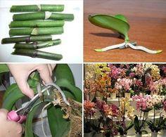 Growing Orchids, Spring Garden Flowers, Plants, Growing Succulents, Orchids Garden, Beautiful Flowers Garden, Vegetable Garden Diy, Propagating Plants, Miniature Plants