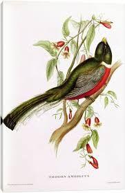Resultado de imagem para john gould birds