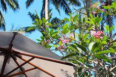 11/17(水)バリ島ウブドのお天気は晴れ。室内温度28.9℃、湿度68%。昨日は雨模様でしたが、今日はいい天気!気温も上昇中です~♪