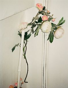 for some reason - these flower sum up a lot of what i want my wedding to be.  pretty.  natural.  effortless.  party.  you know... how did the bouquet end up tangled in the pipe..