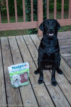#ad Pet Safety with Nudges- Love, Pasta and a Tool Belt #shop #NudgesMoments #cbias | Pets | Pet Safety | Dogs |