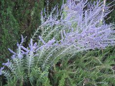 Lavender Color, Lavender Flowers, Shades Of Purple, Gardening, Art, Lavender, Plants, Flooring, Illustrations