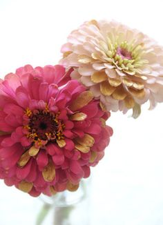 Gilded Flowers: Learn how to make flowers like zinnias have a Midas touch. Source: Creatures Comfort