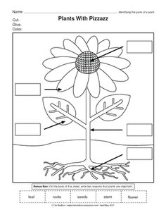 learning about the parts of a plant worksheets for kindergarten spring and lesson plans. Black Bedroom Furniture Sets. Home Design Ideas
