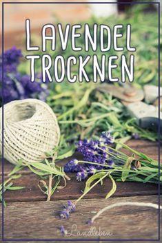 Lavendel trocknen - bspw. um Duftsäckchen herzustellen | vom Landleben