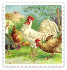 Vintage Country Rooster and Chickens Square Sticker - country gifts style diy gift ideas Vintage Farm, Vintage Easter, Vintage Country, Vintage Holiday, Chicken Images, Chicken Art, Chicken Houses, Chicken Coops, Vintage Postcards